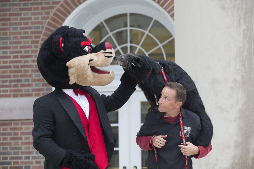 Evolution Of The Bearcat University Of Cincinnati