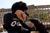 UC convocation and move-in
