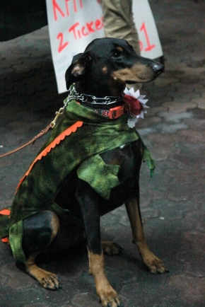 UC Doggies on Parade supporting Canines in the Military