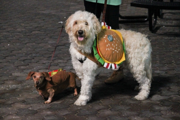 Two dogs dressed in Halloween costumes pose for a parade.