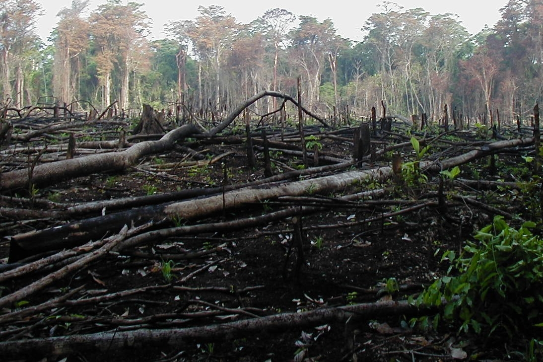 Farmers use slash and burn techniques to turn rainforest into farmland in southern Mexico. (Jami Dwyer/Wikimedia Commons)