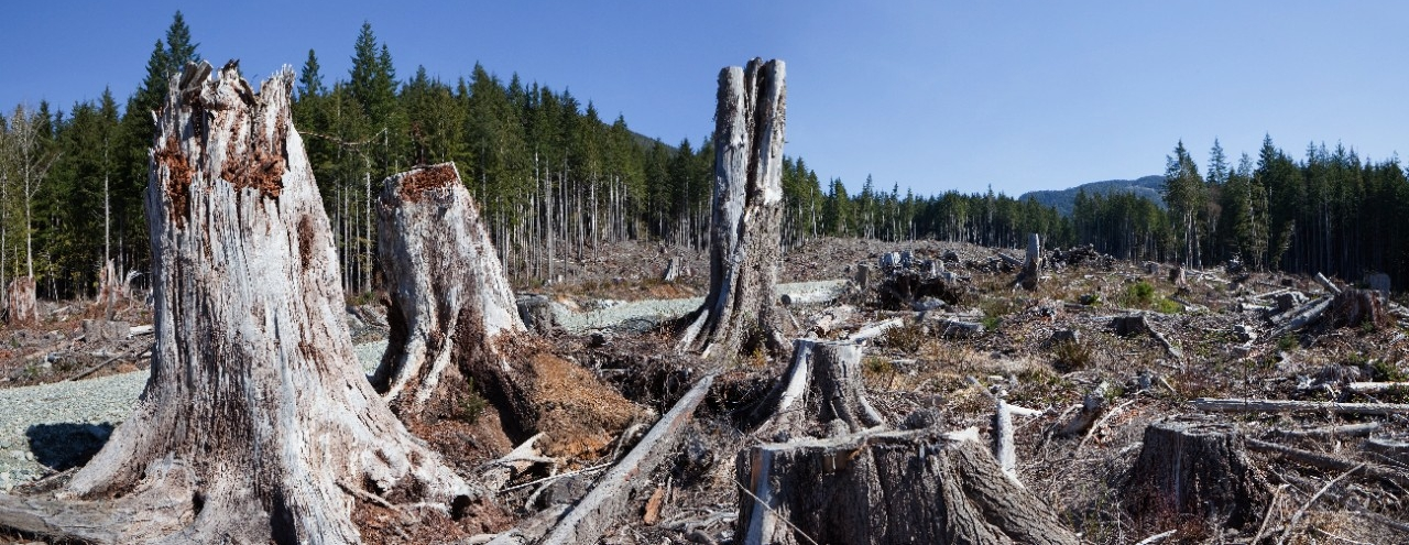 Clearcut logging in the Pacific Northwest. (Dave Mantel/iStockPhoto)