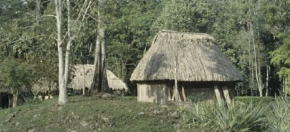 Examples of wood used at Tikal temple, Guatemala.
