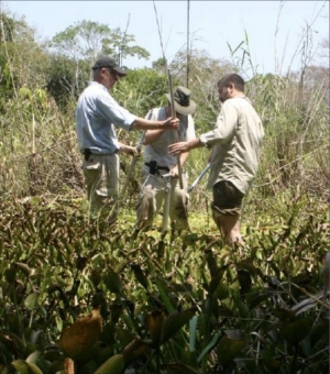 Three men stand in tall brush measuring soil levels with measuring probes.