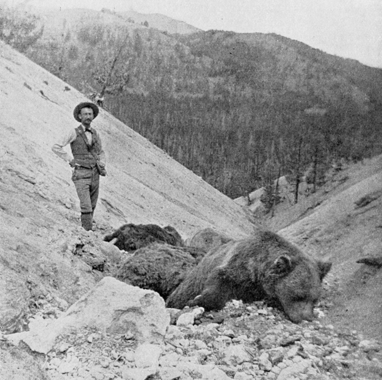 Harvard University geologist T.A. Jaggar Jr. poses next to several brown bears that were asphyxiated by toxic fumes in Yellowstone's Death Gulch in this 1899 photo. Today, animals such as bison occasionally wander into low-lying areas of Yellowstone's geyser basin where they succumb to trapped toxic gases. (Photo by U.S. Geological Survey)