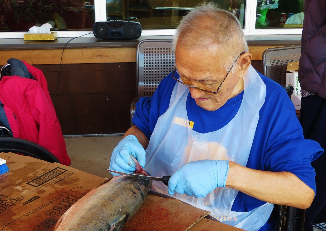 An elderly resident of Kotzebue, Alaska, cleans a fresh salmon.