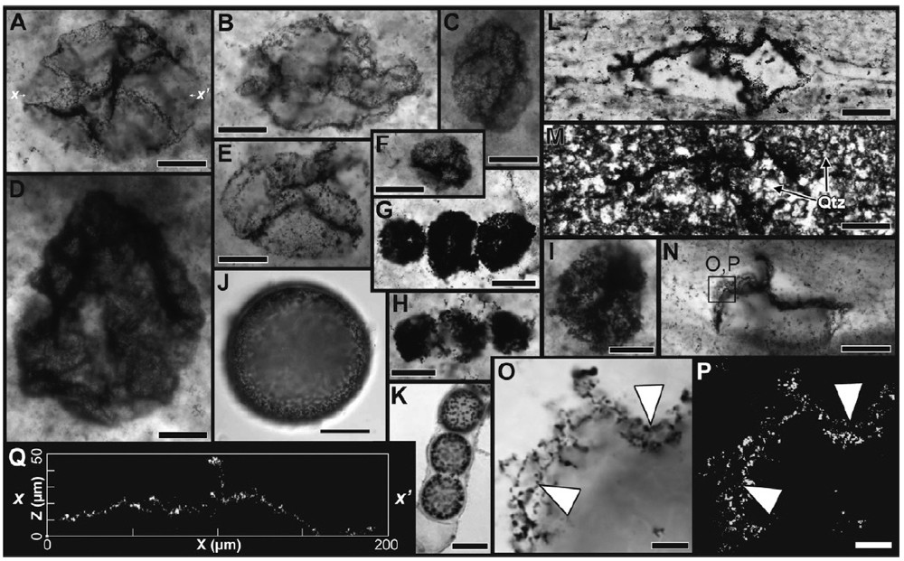 Several microscopic images of fossilized sulfur-oxidizing bacteria shown as dark, round spots within ancient rock. Slide/Andrew Czaja
