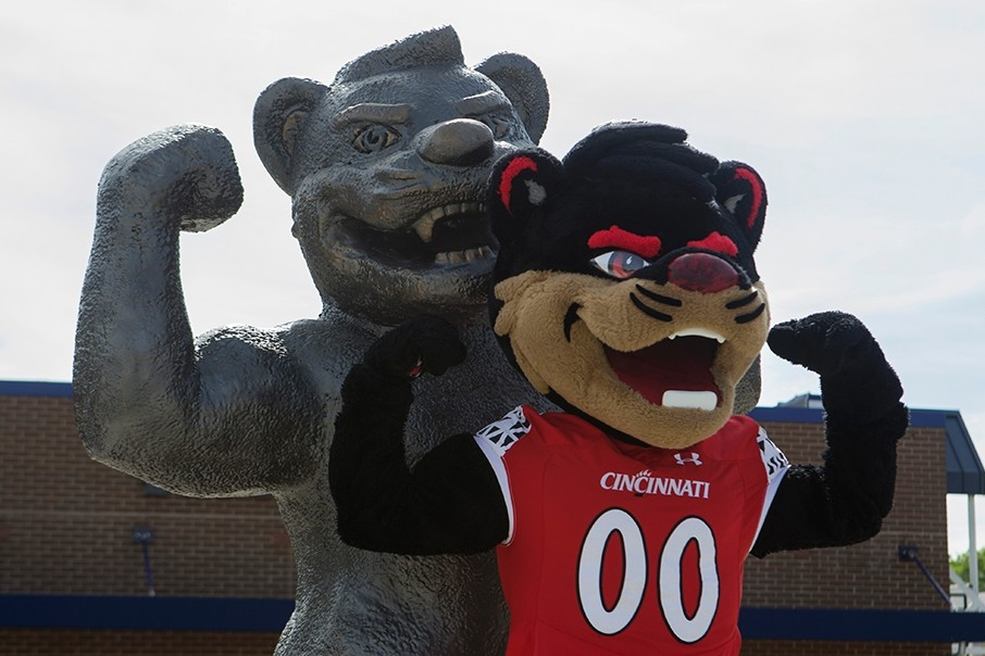 The University of Cincinnati mascot, the Bearcat, strikes a flexing pose next to a statue of the UC mascot in the same pose.
