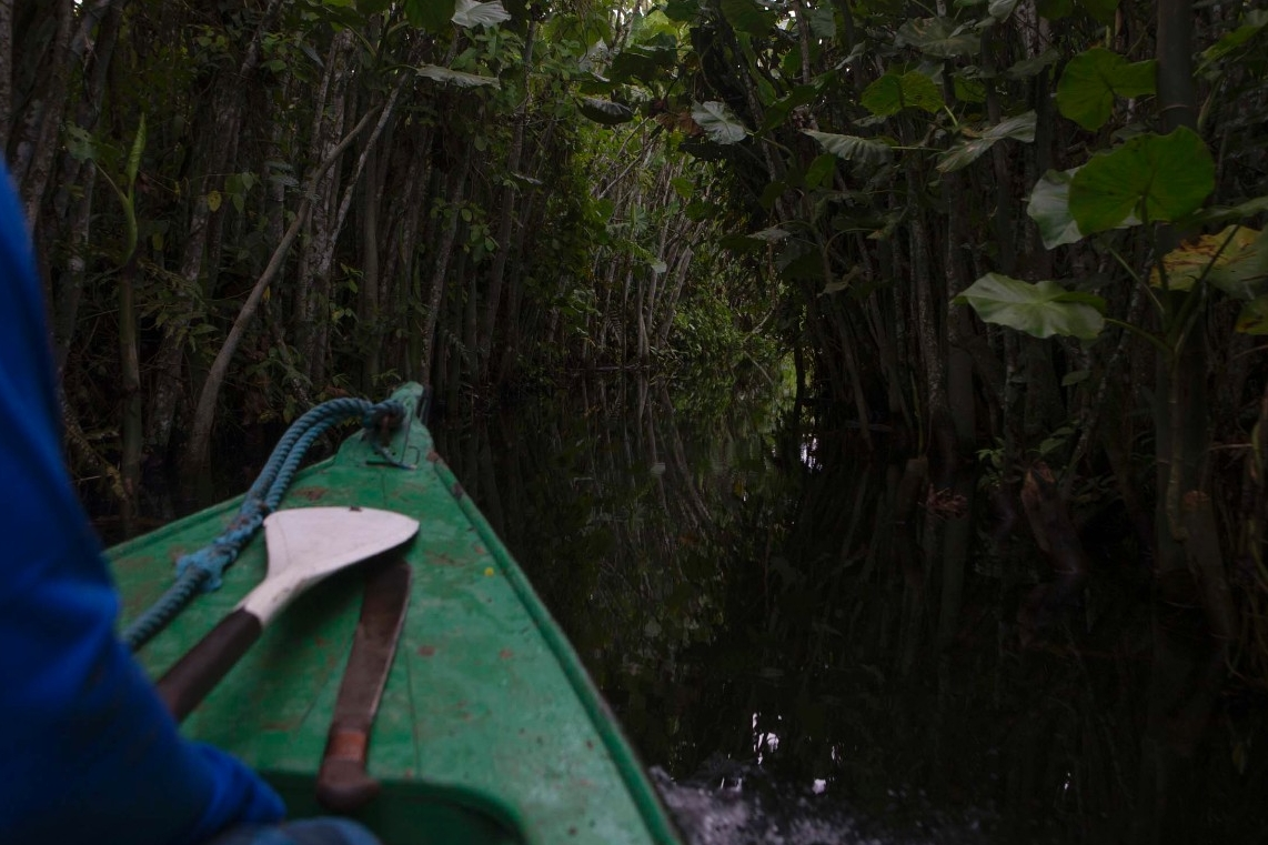 A boat ventures into the unknown of the Amazon river.