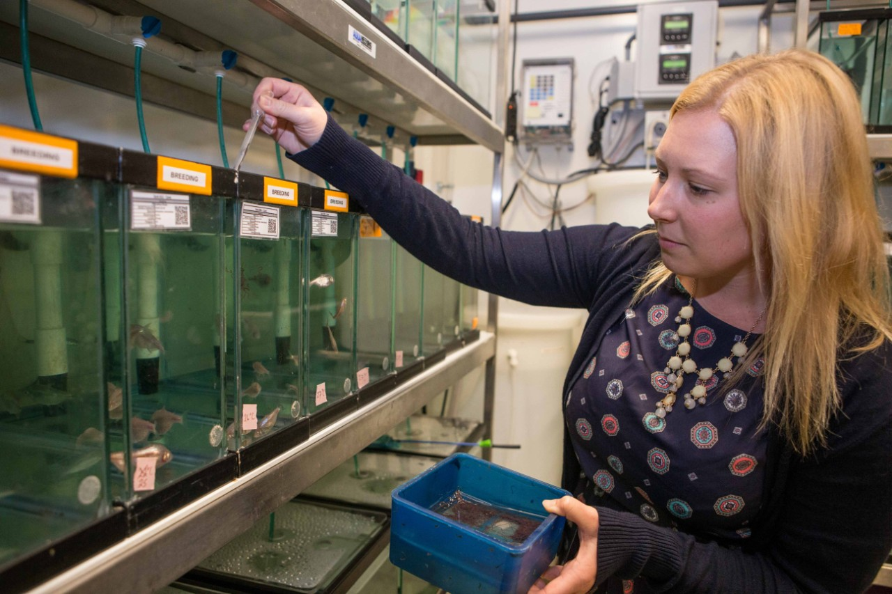 UC graduate student Amanda Powers feeds cavefish in a biology lab.