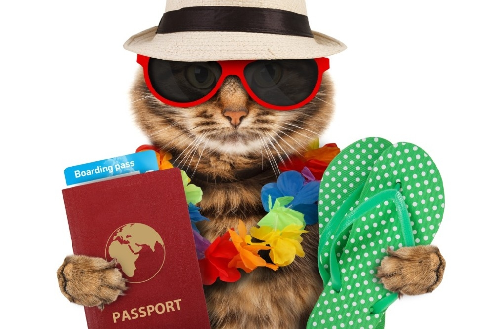 Cat wearing a hat and sunglasses holds rubber flip flops and a passport.