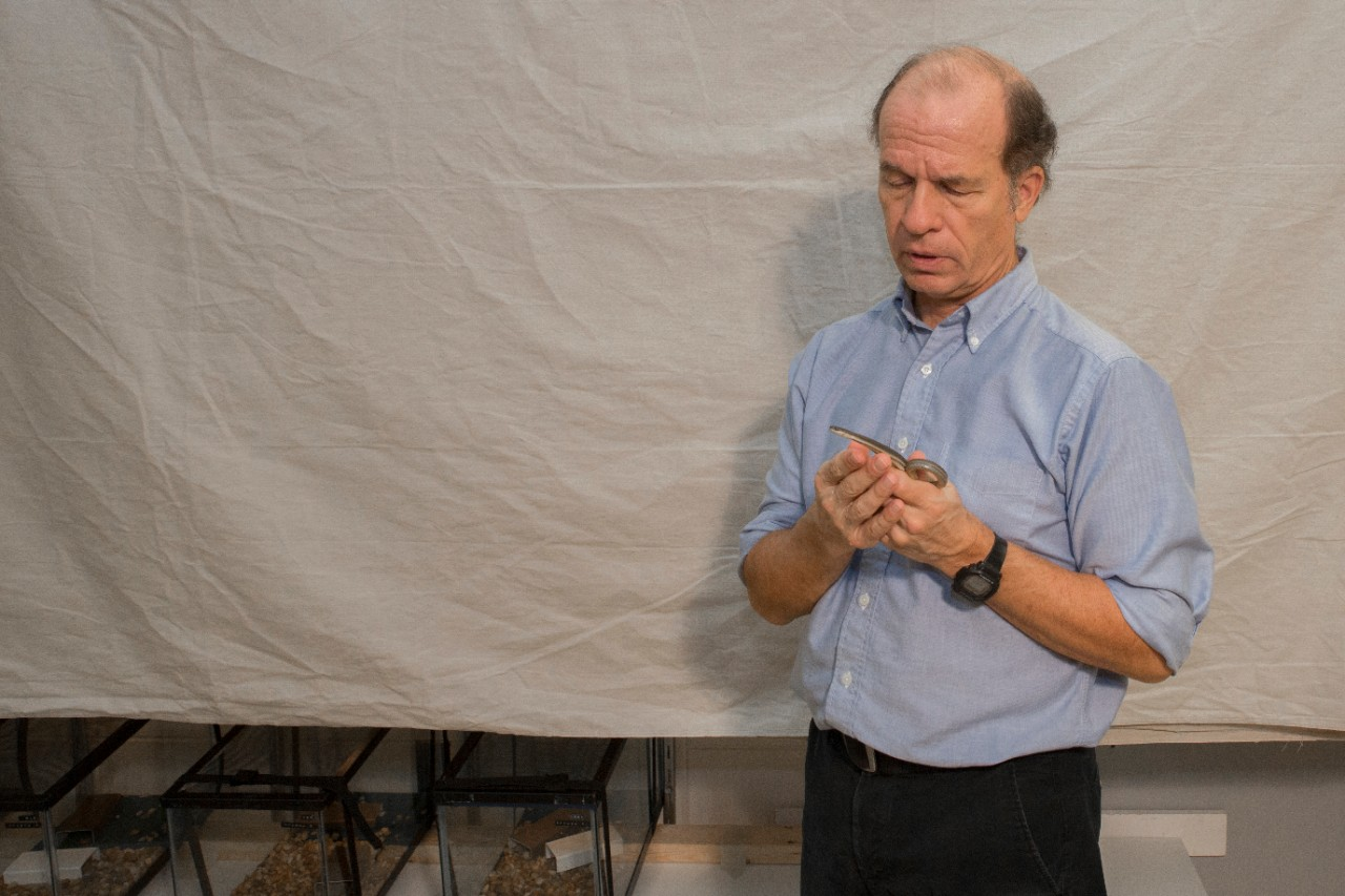 UC biology professor Bruce Jayne holds a queen snake in front of a studio backdrop he uses to record animal locomotion in his lab.
