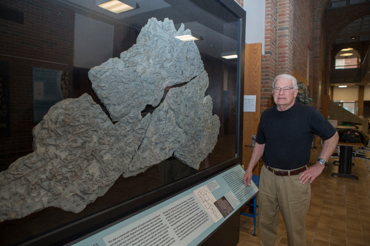 UC geology professor emeritus David Meyer stands in front of a slab of crinoid fossils on display at UC.