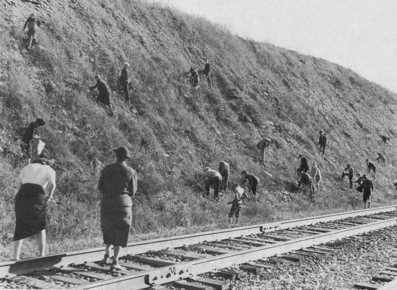 UC geology professors and students, above, collect specimens at a railroad site in Berea, Kentucky, in this 1938 photo. Organizers of these outings formed the Cincinnati Dry Dredgers. (Cincinnati Dry Dredgers photo.)