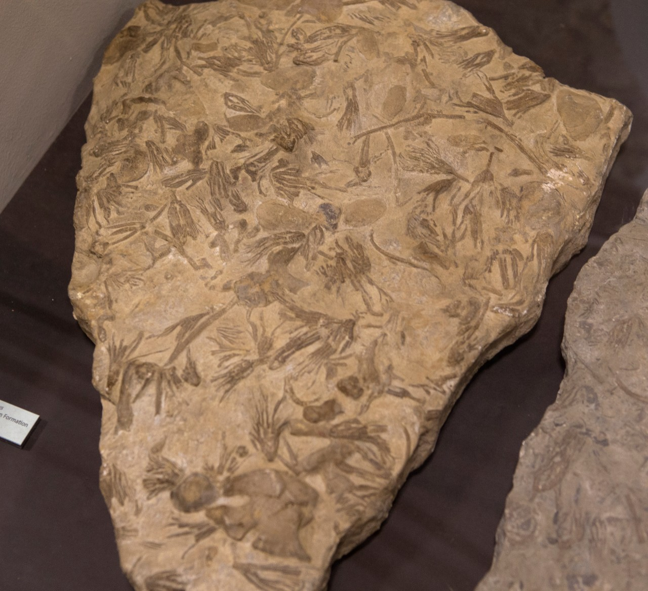 Fossilized sea lilies called crinoids