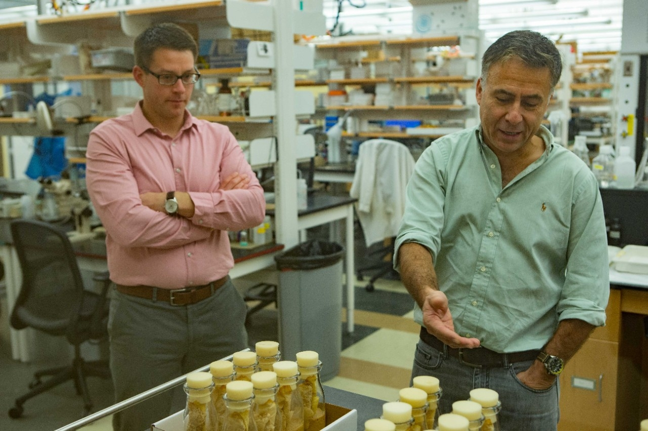 UC assistant professor Joshua Benoit, left, and professor Michal Polak studied how the nutrition of male fruit flies affected their offspring.