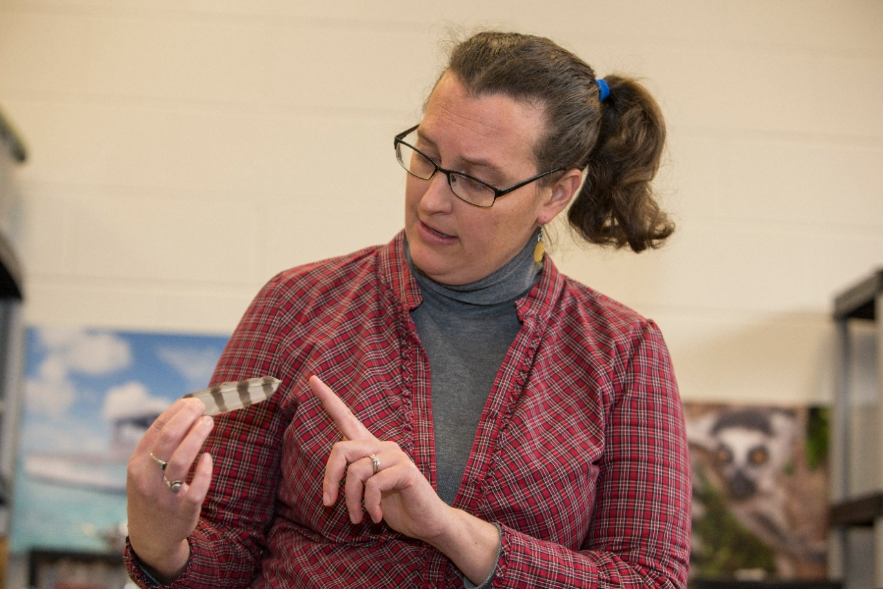 UC professor Brooke Crowley talks about isotopic analysis with hawk feathers.