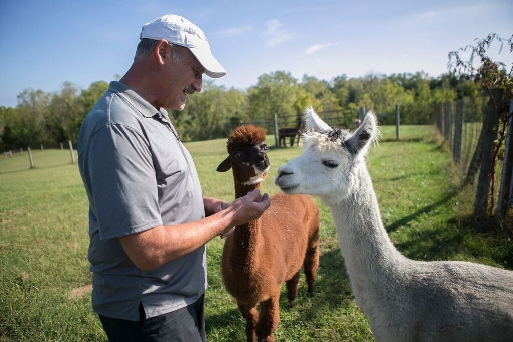 Greg Wahl, a University of Cincinnati alumnus and former baseball pitcher, visits alpacas on his farm.