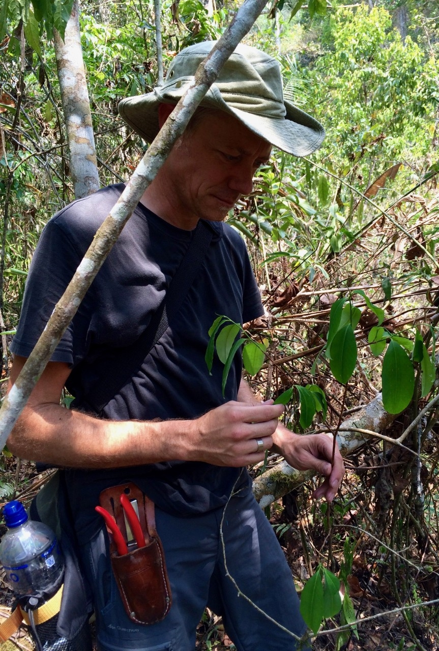 Eric Tepe examines a wild coca plant (Erythroxylum coca) in Chanchamayo, Peru. (Provided)