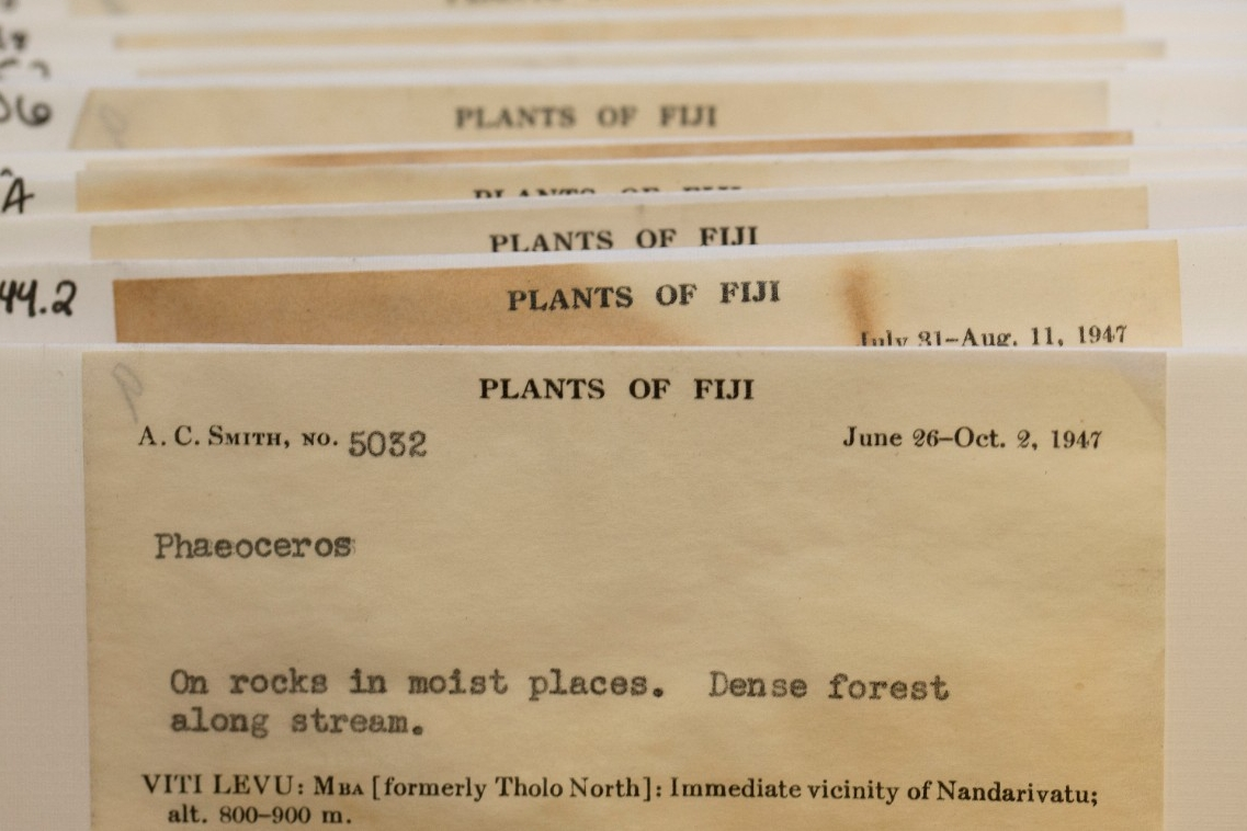 Plants of Fiji.