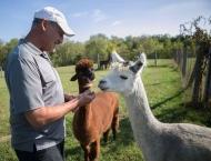 Greg Wahl in field with alpaca
