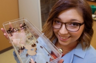 Study of a pregnant cockroach paves a new direction in genetics research