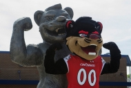The University of Cincinnati mascot, the Bearcat, stands next to a sculpture in his likeness.