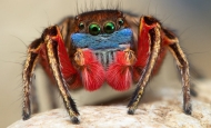 Huge, big colorful spider close-up.