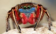 Huge, big colorful spider close-up.