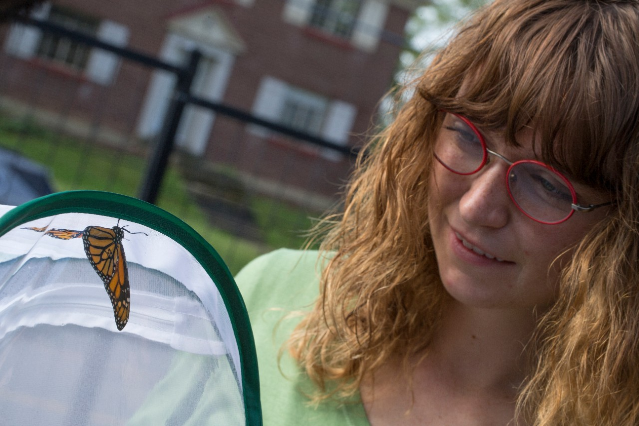 UC student Alexis Moore holds up a monarch butterfly that is part of their migration study.