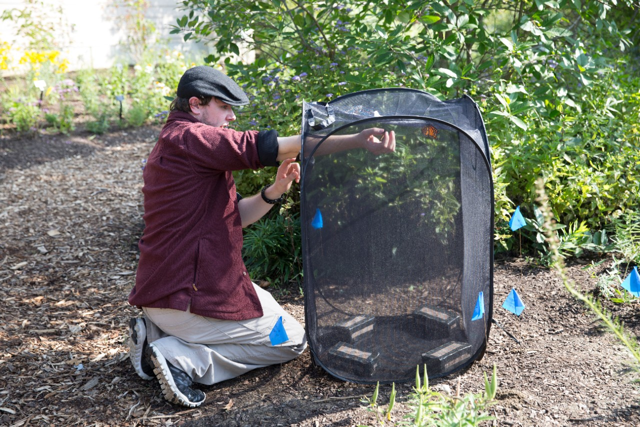 UC biology student Jered Nathan removes a butterfly from the enclosure at the Cincinnati Zoo & Botanical Garden.