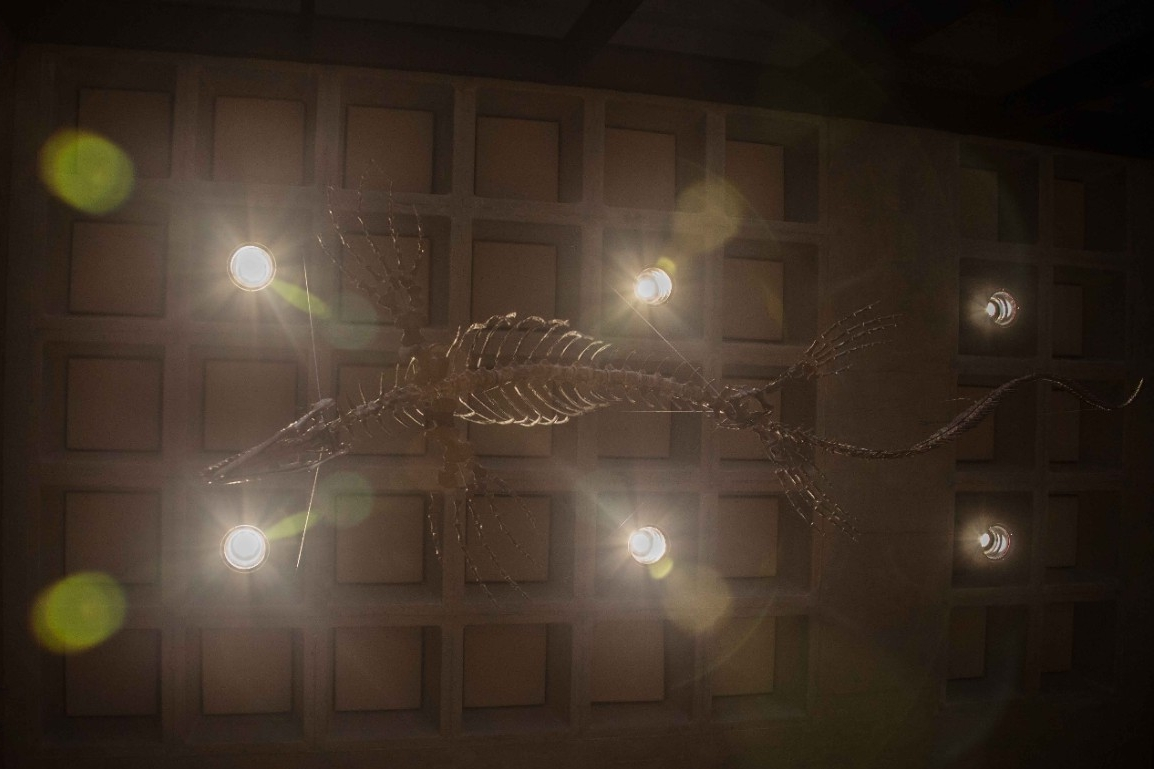 A fossilized mosasaur found in Kansas in 1991 is suspended from the ceiling of UC's Geology-Physics Building where it is on public display.