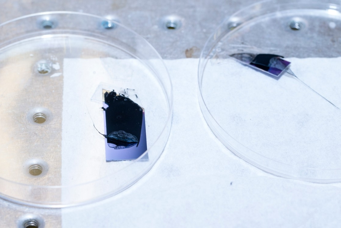 UC engineers grow carbon nanotubes on a purple silicon wafer.