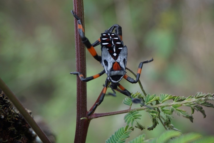 Colorful insect on tree branch in Oaxaca, Mexico.