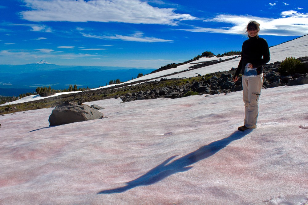UC Professor Trinity Hamilton stands among the pink snow on top of Mt. Adams, Washington.