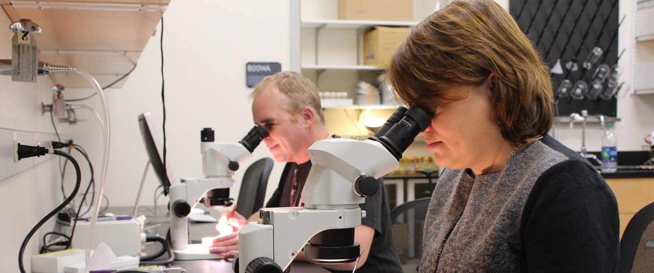 John Layne and Stephanie Rollman working at microscopes