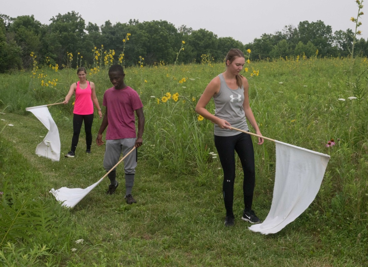 Students use fleece flags to catch ticks in a meadow.