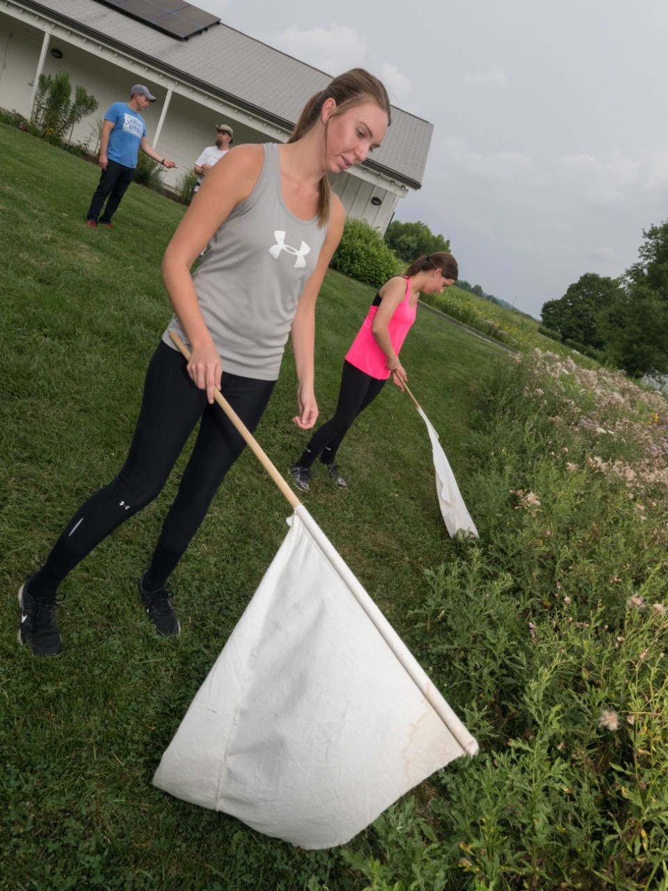 Students use fleece flags to collect ticks at the UC Center for Field Studies.