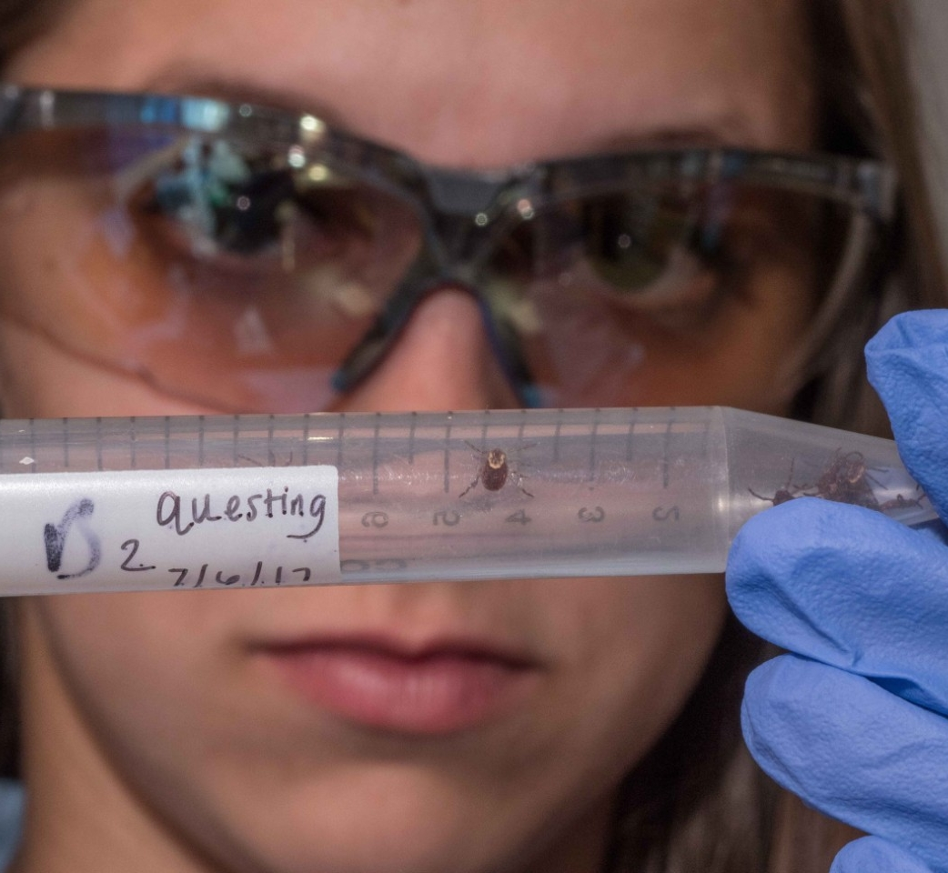 Lab tests reveal the health of ticks collected and what diseases, if any, they carry.