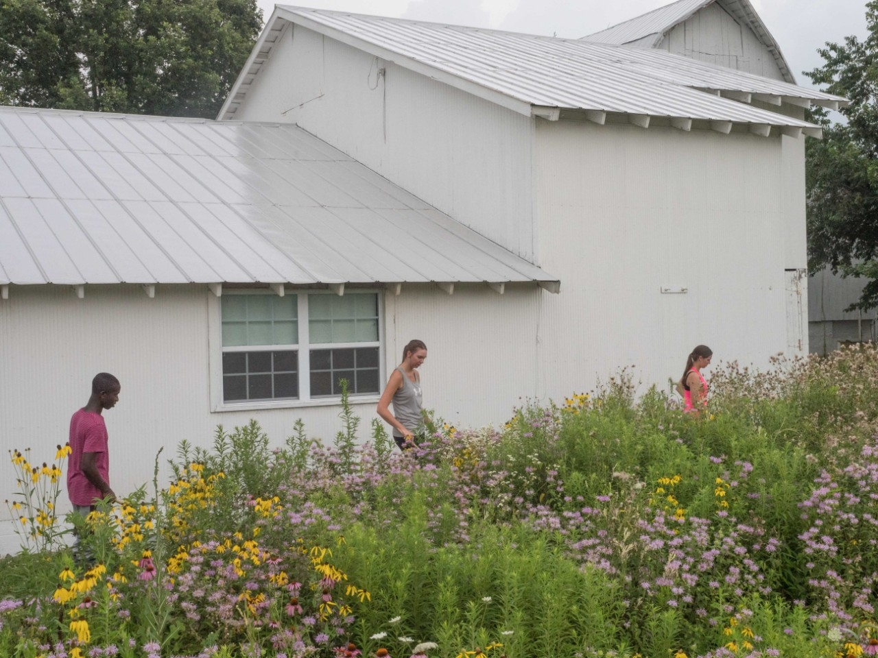 Biology students scout the meadows at the UC Center for Field Studies to collect ticks.