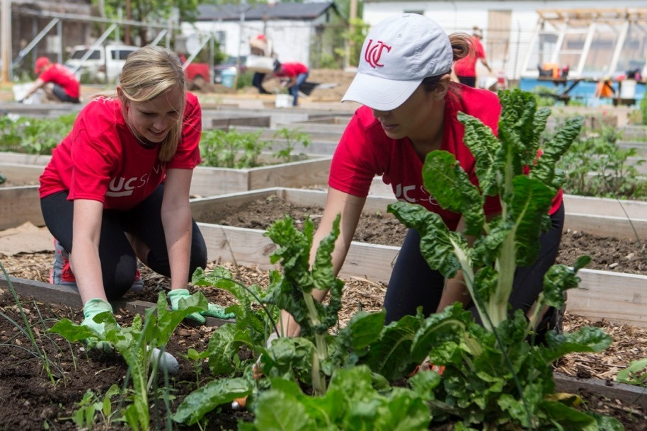 Two women plant vegetables in a raised garden bed inside a local community garden.