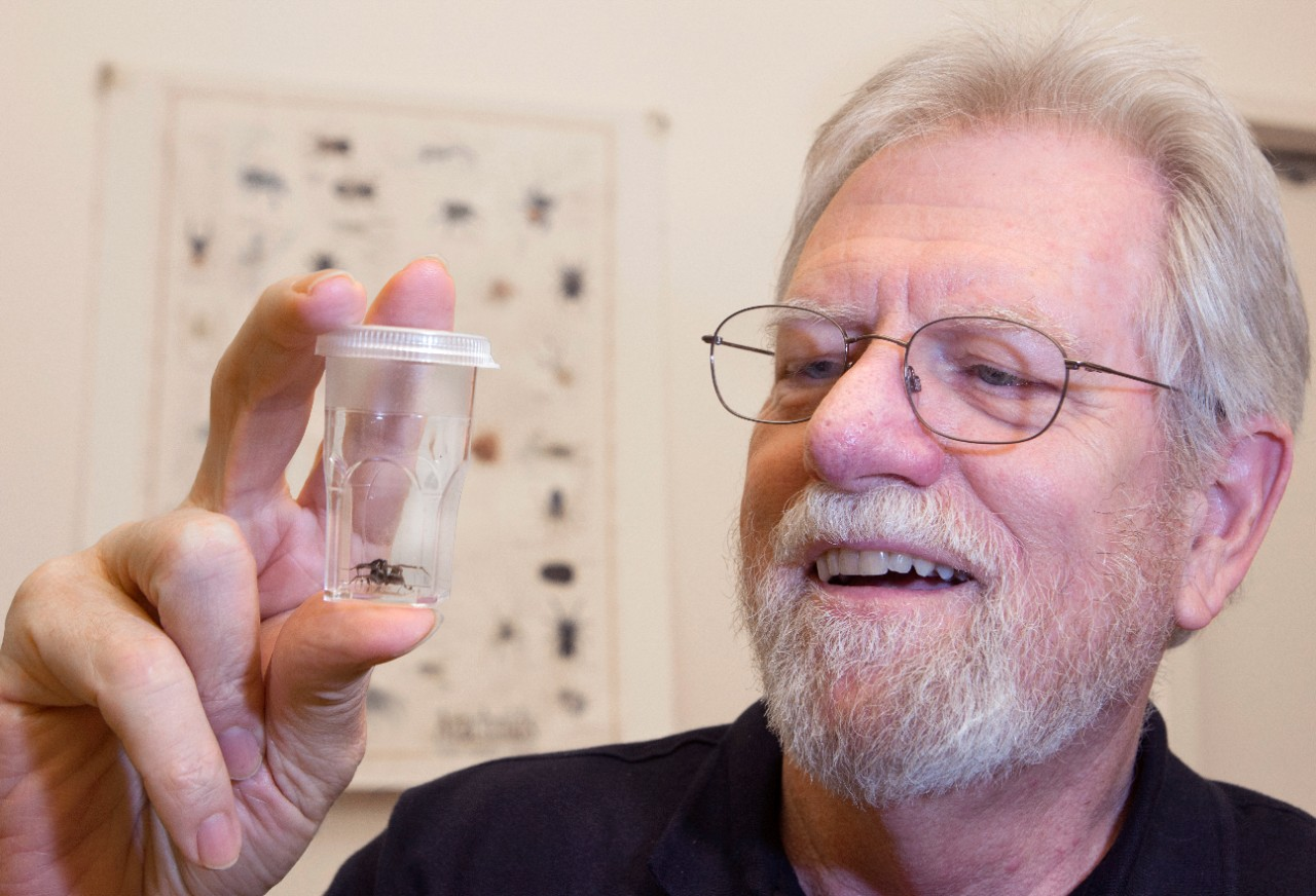 UC biology professor George Uetz has published 129 papers, most of which examine the behavior and evolution of spiders.