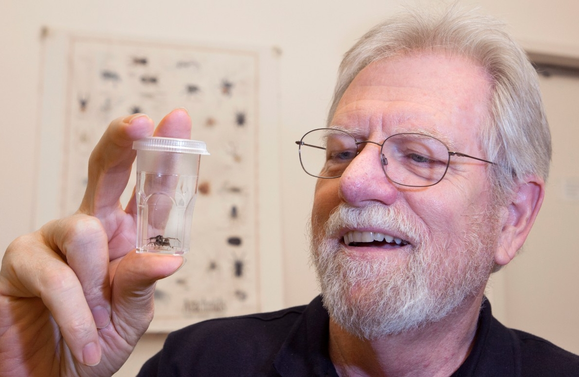 UC biology professor George Uetz has spent much of his career studying spiders.
