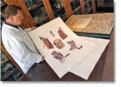 Neurologist John Steiner examines the world's largest medical book. photo/Dottie Stover