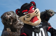 A photo of three versions of the University of Cincinnati mascot, the Bearcat -- a statue, a costumed mascot and a binturong.