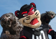 Three versions of the University of Cincinnati mascot, the Bearcat -- a statue, a costumed mascot and a binturoung.
