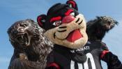 Bearcat mascot, statue and binturong