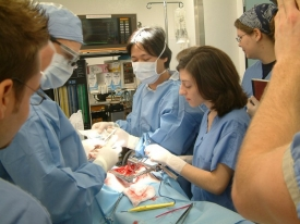 One of Mary Beth Privitera's multidisciplinary student teams, shown here testing a device for the treatment of aortic aneurysms on a pig cadaver