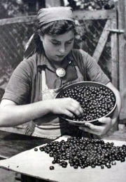 A young woman cleans berries from a large pot.