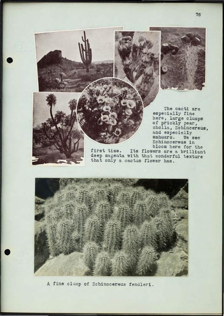 Page from Braun journal featuring photos of cacti